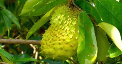Babaco – co to za owoc?