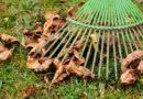 ABC jesiennych porządków w ogrodzie i na tarasie