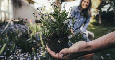 Wiosna w ogrodzie, czyli jak przygotować się do nadchodzącego sezonu